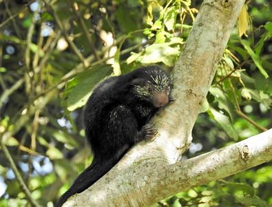 2016_06_Honduras_Lancetilla Botanical Gardens