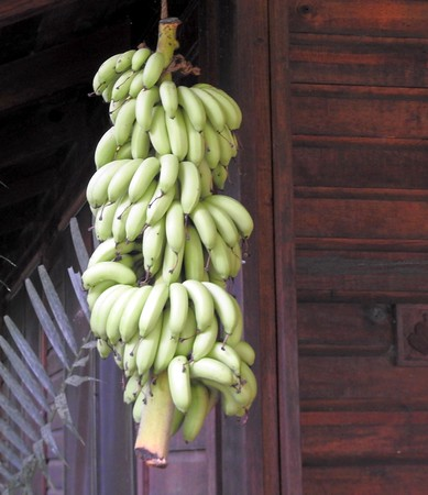 Plantains at the lodge