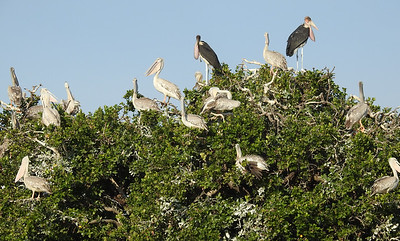Heronry Overview