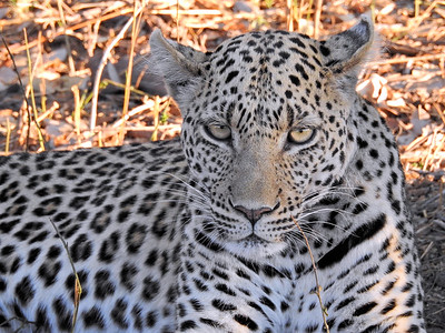 Botswana Safari_Animals_Birds_Hospitality
