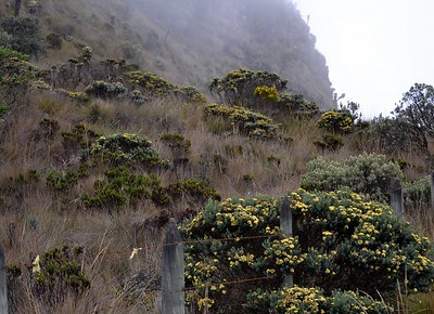 "This unique highland ecosystem of the Andes, described by some as a ""water factory."" Its sponge-like soil and particular vegetation and geology capture water in the rainy season, acting as a natural buffer against floods. During the dry season, the páramos release water into hundreds of small creeks that feed crops and reservoirs.   Páramos represent only two percent of Colombia's land, but provide water to 70 percent of its people."