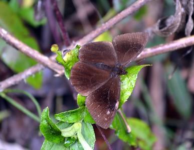 Colombia Butterflies