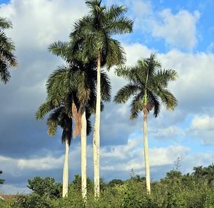Cuba Arrival to Las Terrazas_Soroa