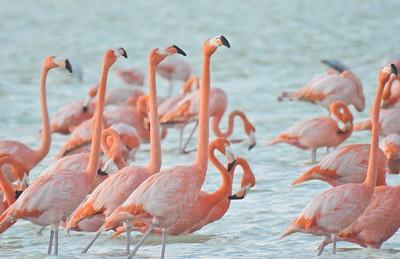 Birds of Cuba