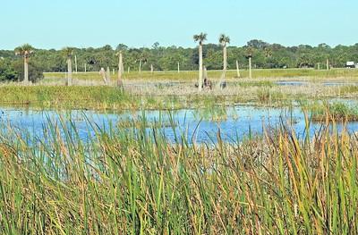 Ritchie Grissom Viera Wetlands - Florida