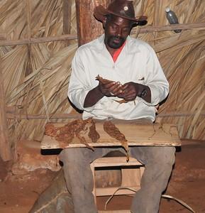 Cigar making demonstration