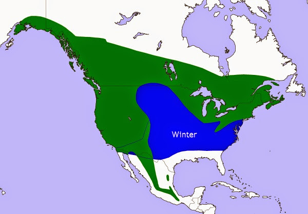 Range map for the Northern Saw-Whet Owl