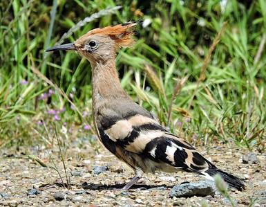 Portugal Birding 4.2015