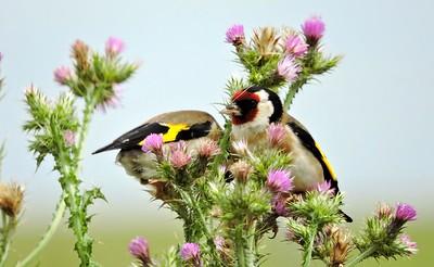 Portugal Birding Tour