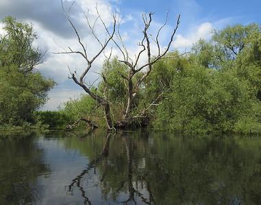 Typical scene in the Danube Delta