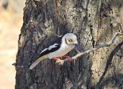 South Africa Birding_Sept. 2018