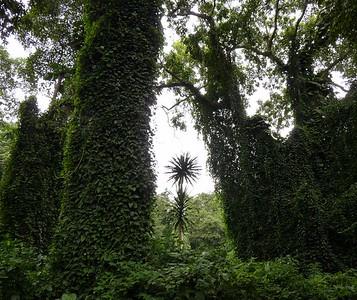 Entebbe Botanical Gardens - a variety of habitat present