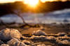 Edmonds Winter Beach Foam