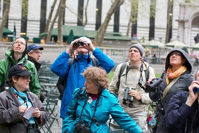 2013 Apr 29: Bryant Park Birding