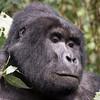 at Ruhija, Bwindi Impenetrable Forest, Uganda (11-27-2017) 139-464-Edit