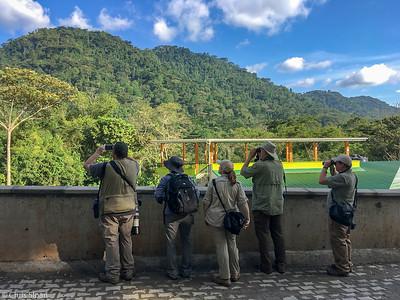 Birding the Buhoma Main Trail, Bwindi Impenetrable Forest National Park, Uganda (11-29-2017)