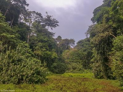 Mabira Forest, Uganda (11-23-2017) 162-5