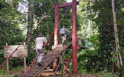 Birding at Borneo Rainforest Lodge, Sabah, Malaysia (06-26-2016)