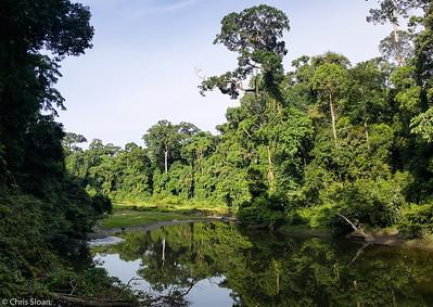 Danum River at Borneo Rainforest Lodge, Sabah, Malaysia (06-26-2016)-2-4-Pano