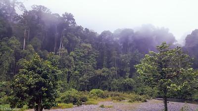 Dawn at Borneo Rainforest Lodge, Sabah, Malaysia (06-27-2016)