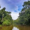 Menanngol Tributary at Sukau, Kinabatangan River, Sabah, Malaysia (07-02-2016)