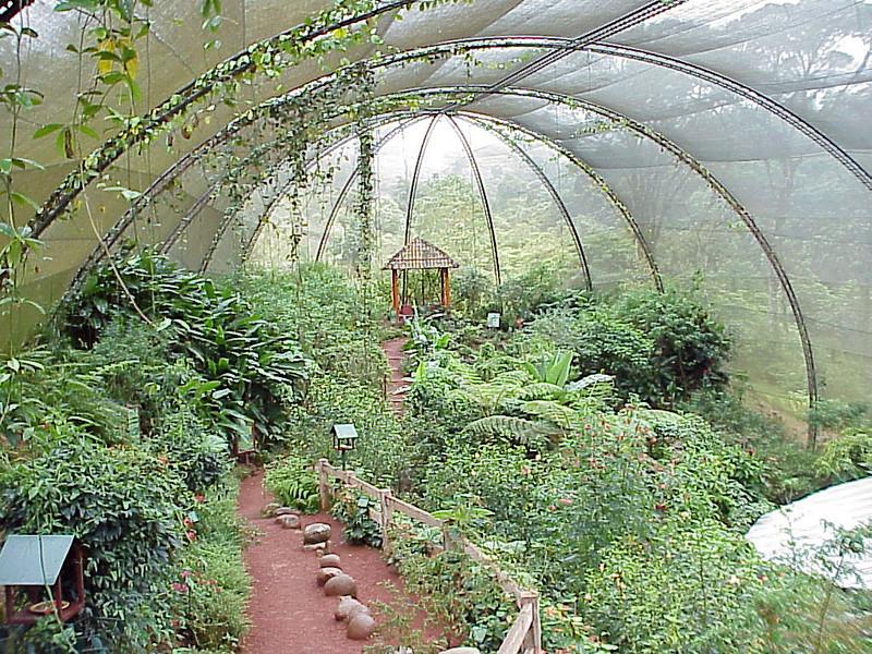 Butterfly Exhibit 2 at La Paz Waterfall Gardens Costa Rica 2-10-03 (50898074)