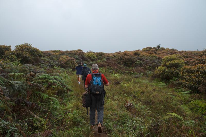 Miconia scrub at Santa Cruz, Galapagos, Ecuador (11-20-2011) - 539