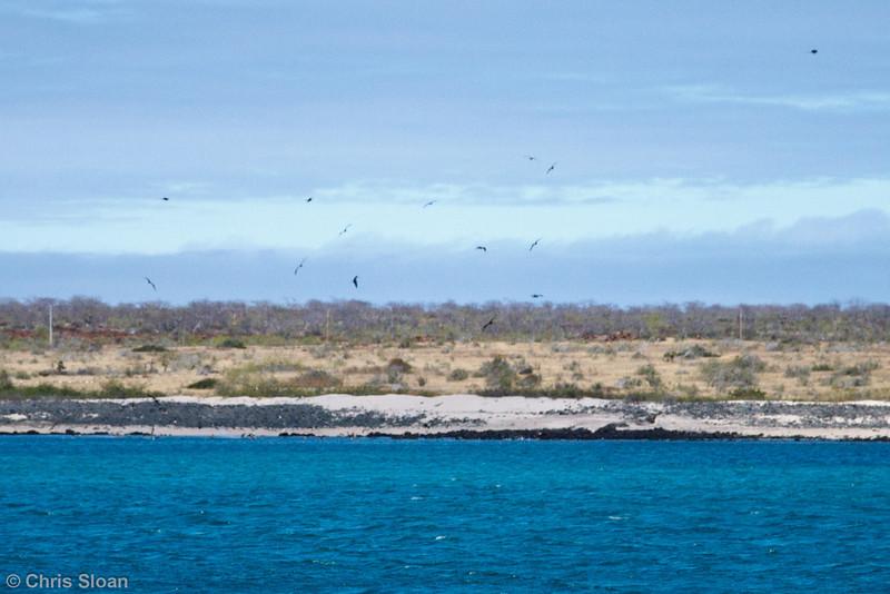 North Seymour Island, Galapagos, Ecuador (11-19-2011)