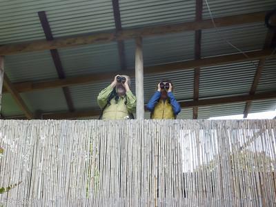 John Noel and Melinda Welton watching bird table at Kumul Lodge, Papua New Guinea (09-28-2013)-2