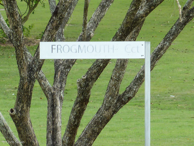 Frogmouth Court at Pacific Adventist University, Papua New Guinea (09-27-2013)-2