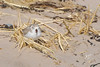 Sleeping in the grasses that lay strewn along the beach 2 days after the storm.