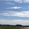 Plum Island: South of Hellcat Dike: Tree Swallows movie