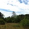 Plum Island: Near Bill Forward Bird Blind: Tree Swallows massing near dead tree