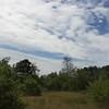 Plum Island: Near Bill Forward Bird Blind: Tree Swallows massing near dead tree movie