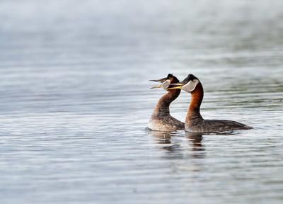 Birds of Anchorage