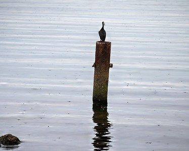 Shag on Pylon