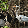 Heron and Tortoise