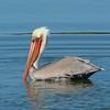 Birds2 : Shorebirds, Hawks and other birds