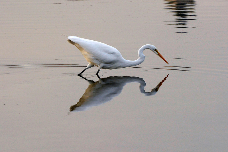 Egret and it's reflections
