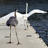 get off my dock