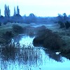 DSC09047-swan