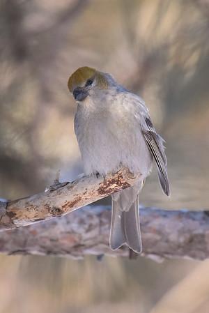 Birds 2016