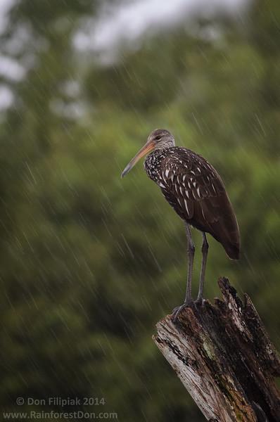 Rainy Day Warrior