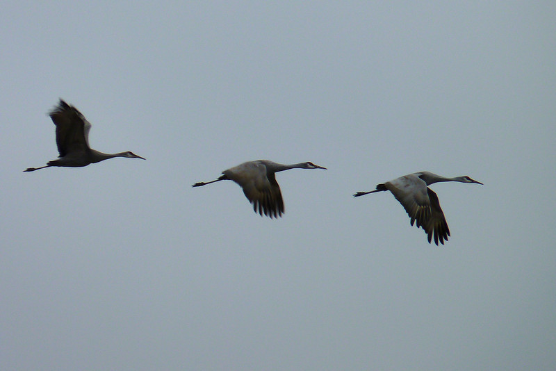 One group (not this one) flew fairly low, directly over our heads....leaving us with our mouths agape.