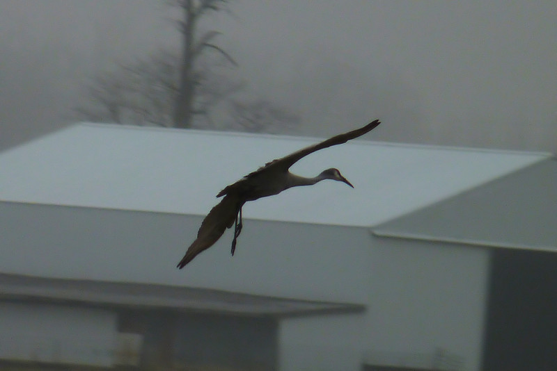 We caught this guy coming in for a landing.
