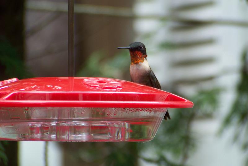 Such a pretty little bird!