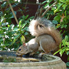 Lots of critters enjoyed the birdbath during the dog days of August.