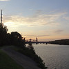 Purple Martin Roost on the Ohio River at Louisville, KY, August 15, 2014