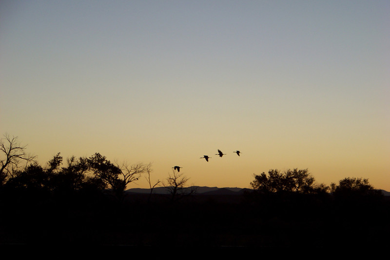 Day 2: November 17th -- My all-morning Sandhill Crane workshop began at 5:30 a.m. We started before sunrise at a pond where the cranes had spent the night.  A few early risers took flight.