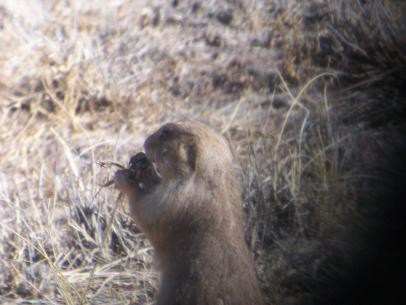They were pretty wiggly, and didn't make for very good digiscoping subjects.